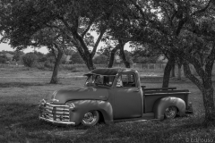 old chevy truck under trees